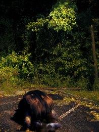 SMTransitiion.Bear.Summer