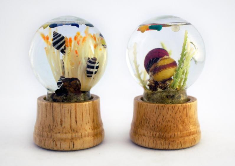 Small sea globes