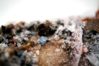 PlasticIsLand-frozen-mus-SM